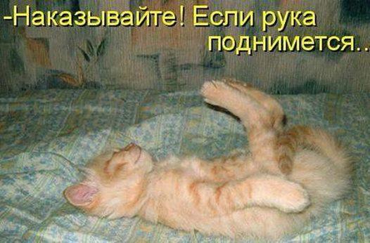 1888635_498594676927180_1444174706_n.jpg