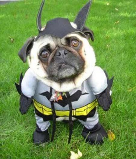 dog-costumes-1.jpg