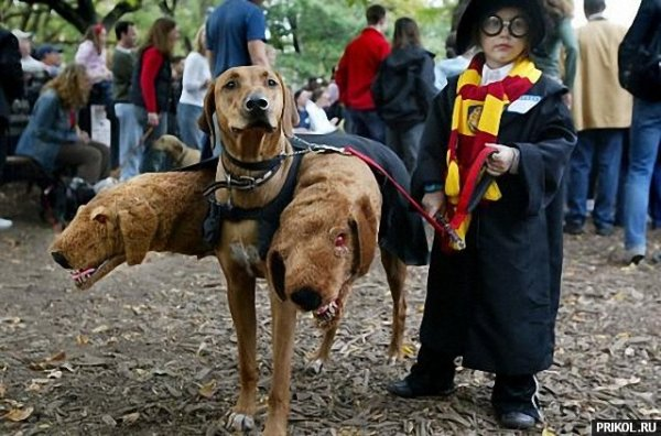 dogs-costumes-01_2015-04-12.jpg