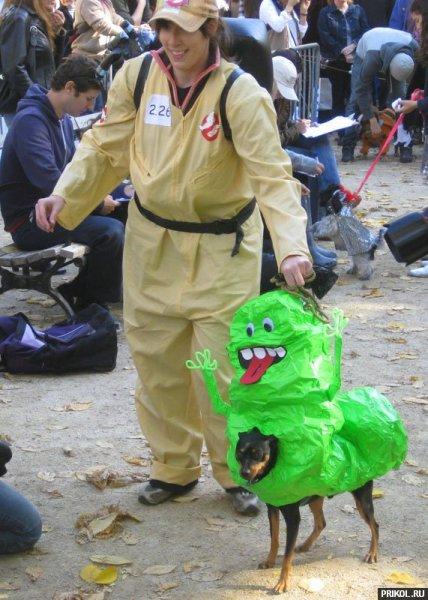 dogs-costumes-04.jpg
