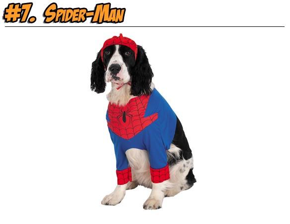 dogspidey-1287361812.jpg