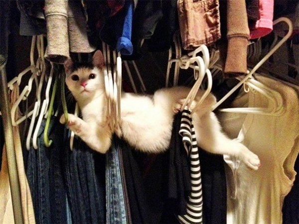 funny-cats-dogs-stuck-furniture-13.jpg