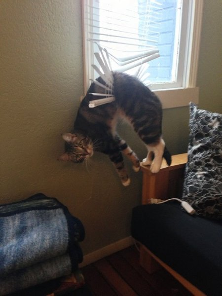 funny-cats-dogs-stuck-furniture-16.jpg