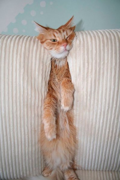 funny-cats-dogs-stuck-furniture-32.jpg